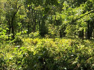 40 Acres Hunting / Recreation / Randolph NY