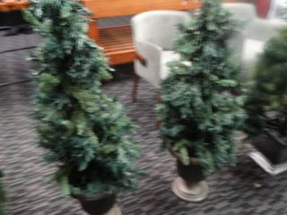 2 potted Christmas trees