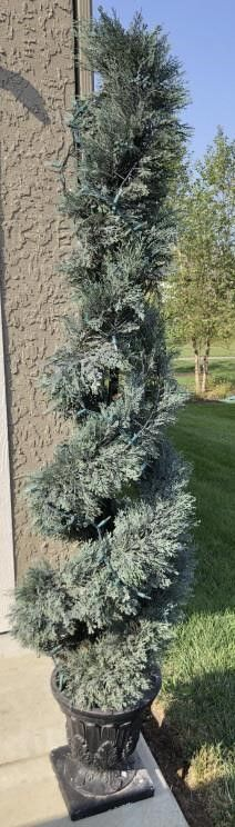 large Topiary Plant
