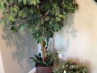 Basket and Indoor Tree