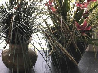 2 Tall Grass Plants