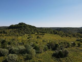 116.16 Acres - Absolute Online Only Auction