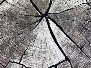 Rainier Area Rug   Oak Tree   7ft 10in x 9ft 10in
