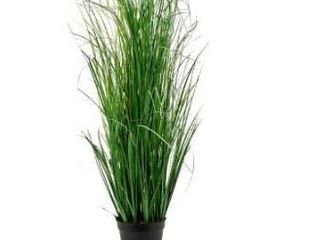 Onion Grass Potted   Green Retail 106 99