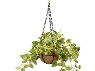 9  Pothos Plant Hanging Basket  small set of 2