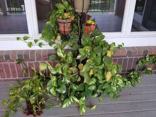 Plant stand with plants
