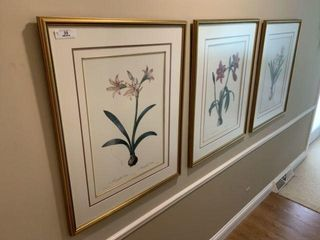 Three Large Botanical Prints