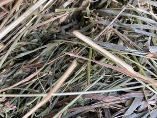 34 AlFAlFA GRASS MIX HAY BAlES