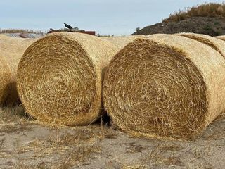1 lOAD OF OAT STRAW BAlES  34 BAlES