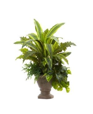 25 inch Mixed Yucca  Marginatum  Pothos   Bracken w Planter