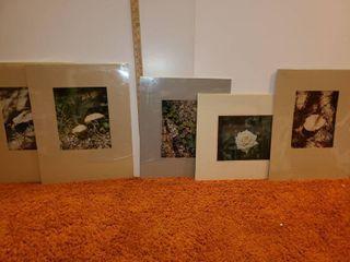 5 Judy Dove Outdoor Photos in Frames