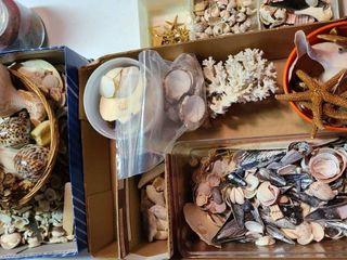 Seashells  Abundance