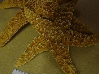 2 Starfish