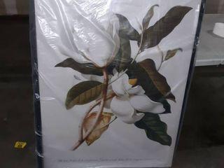 Georg Dionysius Ehret s Magnolia  Gallery Wrapped Canvas