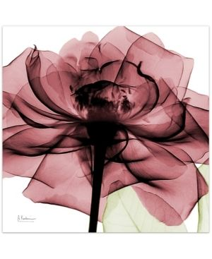 Empire Art Direct Chianti Rose II Frameless Free Floating Tempered Glass Panel Graphic Wall Art  24  x 24  x 0 2