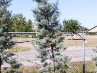 Pyramid Blue Ice Cypress