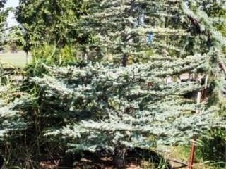 Hartsman Blue Atlas