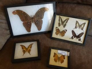 lot of Framed Butterflies and Moth