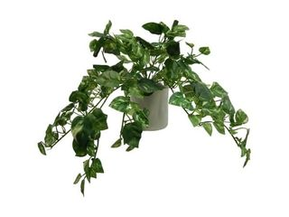 Modern Pothos Arrangement   Green