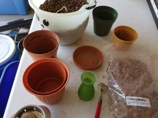 local clay orchid grow media and small pots