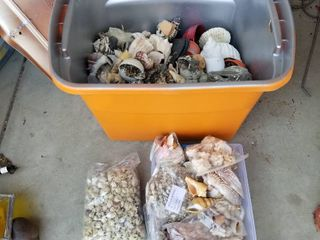 large collection of seashells