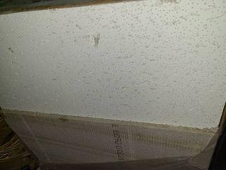 Acoustical Ceiling Tiles  8 2 FT  x 4 FT  X 5 8