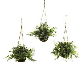 Eucalyptus and Maiden Hair Hanging Basket  Set of 3