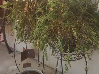2 Metal Plant Stands  20 to 22 in  tall  2 live Ferns  Metal Yard Decor and Potted live Coral Bell  Pot Broken