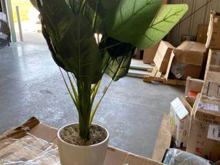 Bird of Paradise Foliage Floor Plant   Green