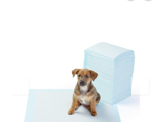 Amazonbasics Regular Size Pet Training And Puppy Pads   Pack Of 100