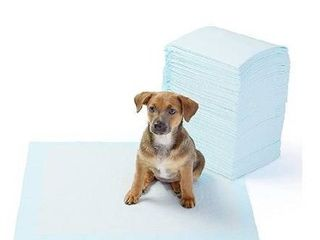 AmazonBasics Dog and Puppy Potty Training Pads  Regular  22 x 22 Inches    Pack of 100