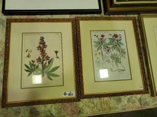 2  Floral Ranunculaceae Prints