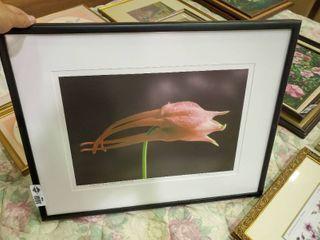 Framed Floral Photo  8 200
