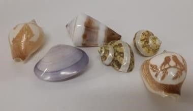 Assortment of Shells