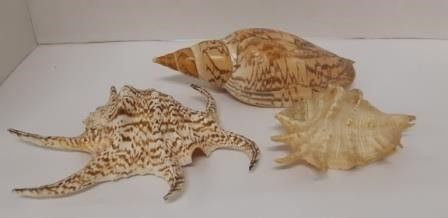 3 large Shells