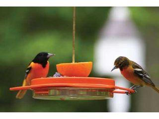 Birds Choice 1009 Oriole Fest Oriole Feeder  12 Ounce  Orange