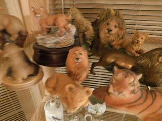 lions  Tigers   Bears Collection