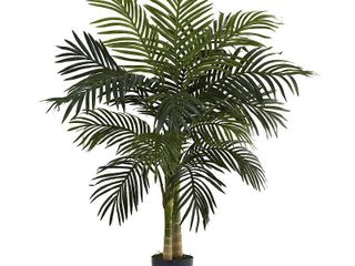 4 Foot Golden Cane Palm Tree