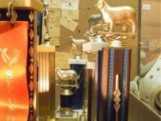 livestock Trophies  1 Box