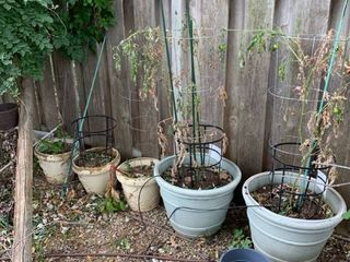 Set a five outdoor pots with dirt