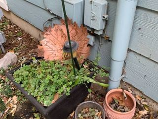 Outdoor pots with Copperleaf