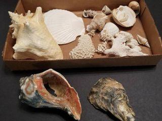 Assorted seashells
