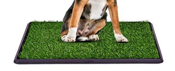 GIANTEX DOG PUPPY PET OUTDOOR