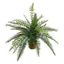 Real touch river fern floor plant in basket   Green