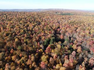 46.8+/- Acres with Cabin