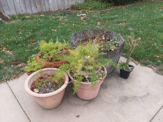 Various Flower Pots