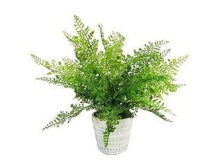 lace Fern Pot 13 5