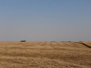 189.85 +/- Acres Dodge County Farmland