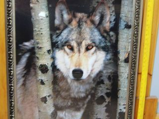 Beautiful Wolf Wall Picture See Photo