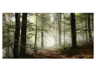 Designart  light in Dense Fall Forest with Fog  landscape Canvas Art Print